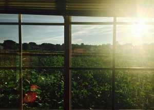 house window tinting temecula