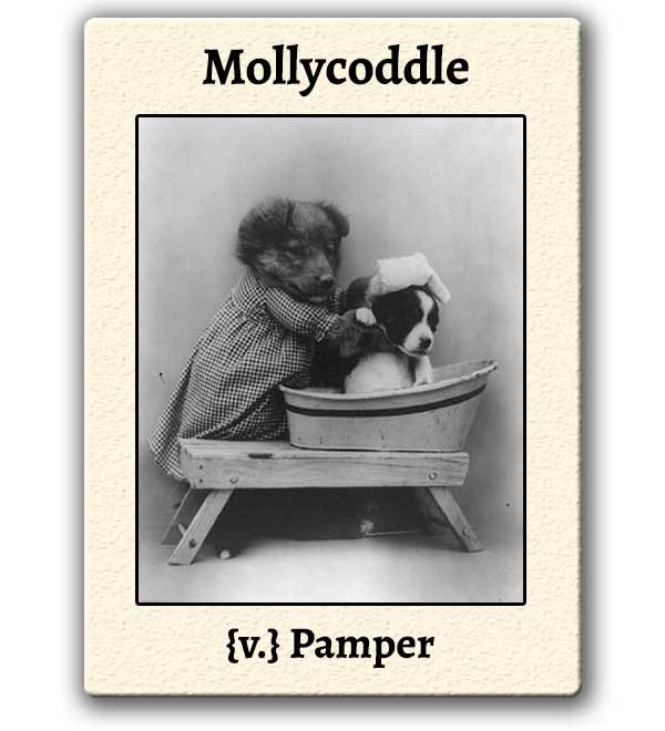 funny-words-mollycoddle-definition