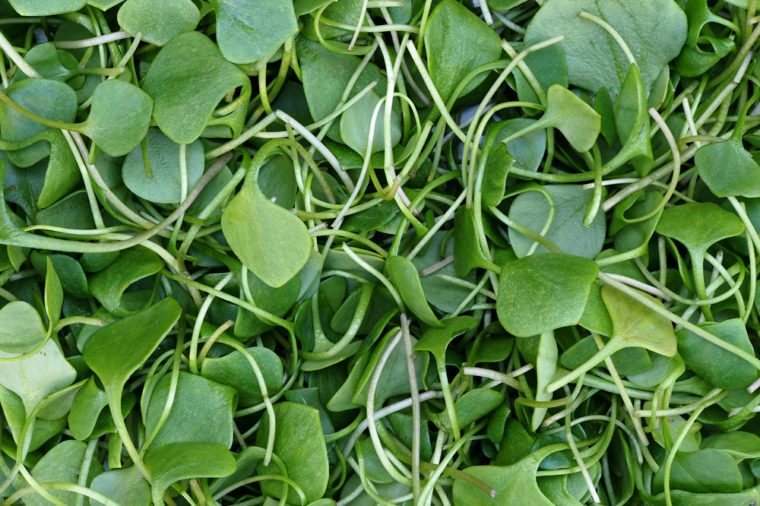 Watercress background