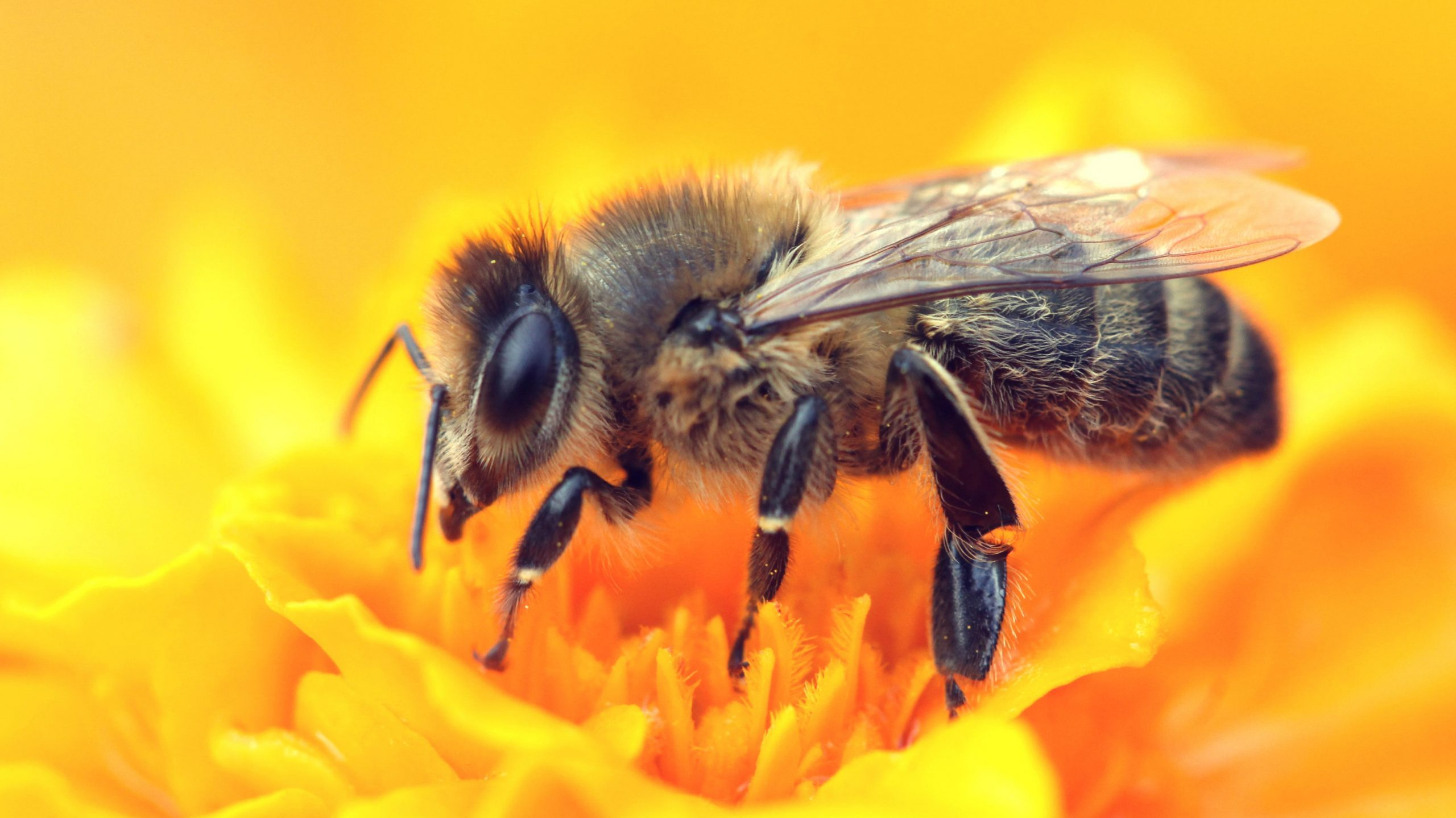 How We Can Help Honeybees Every Day Reader S Digest