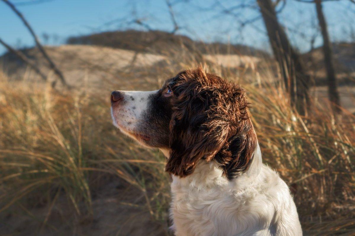 My vigilant companion - a walk at the dunes