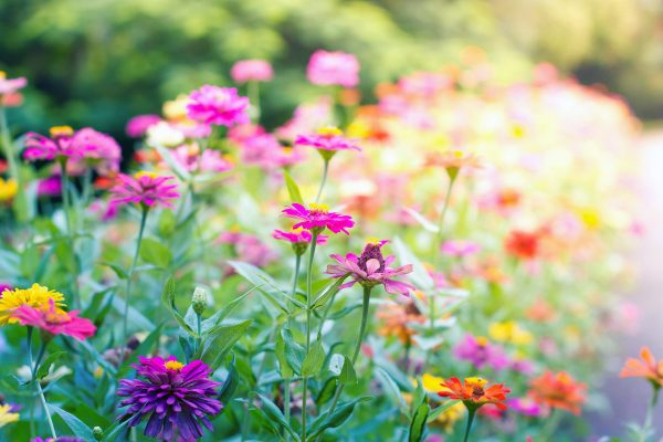 butterfly garden plants flowers Grow a Butterfly Garden: 8 Easy Tips | Reader's Digest