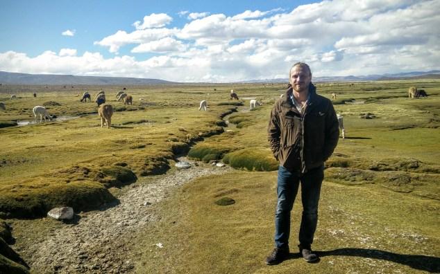 Lama and alpaca grazing.