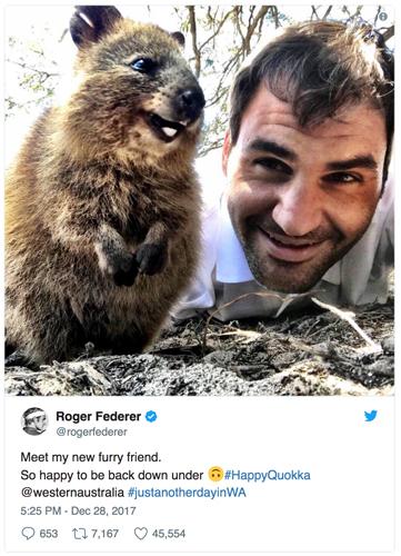 Federer_quokka_500.jpg