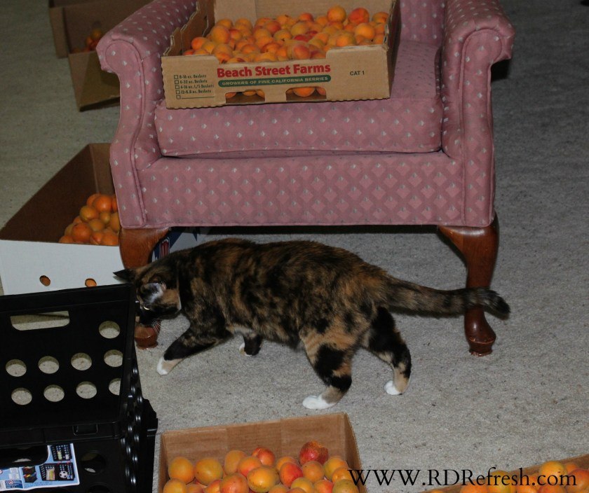 Kitty in the apricots