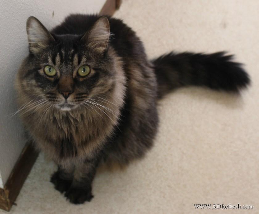 Kitty#2
