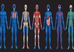 Scientific Facts About The Human Body
