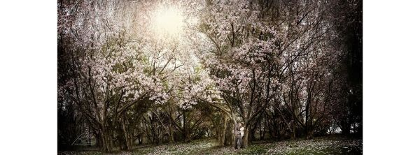 Japanese Garden Engage