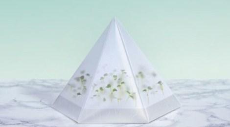 Um novo micro jardim para sua casa
