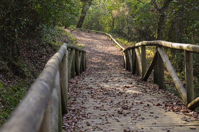 Valdeinfierno Los Barrios, Los Alcornocales Natural Park