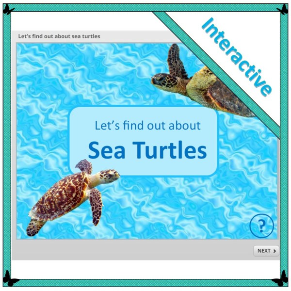 Let's find out about sea turtles cover