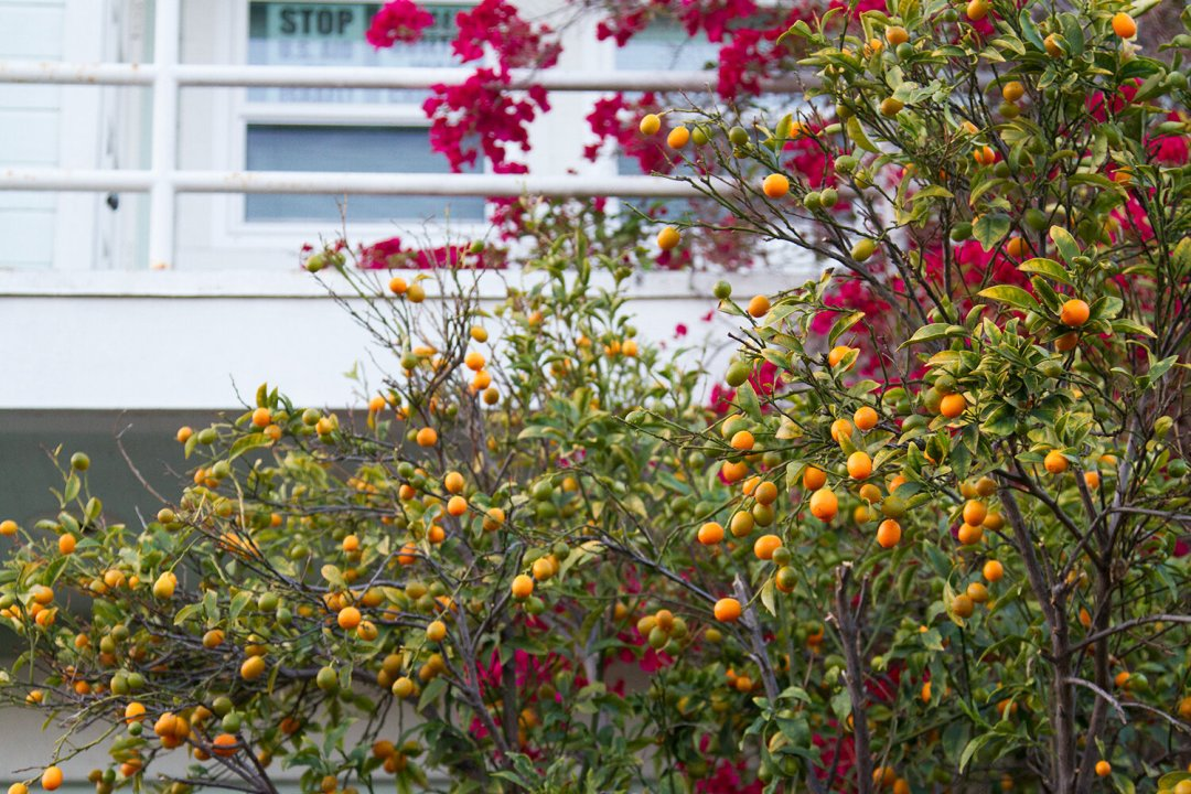 venice, california | reading my tea leaves