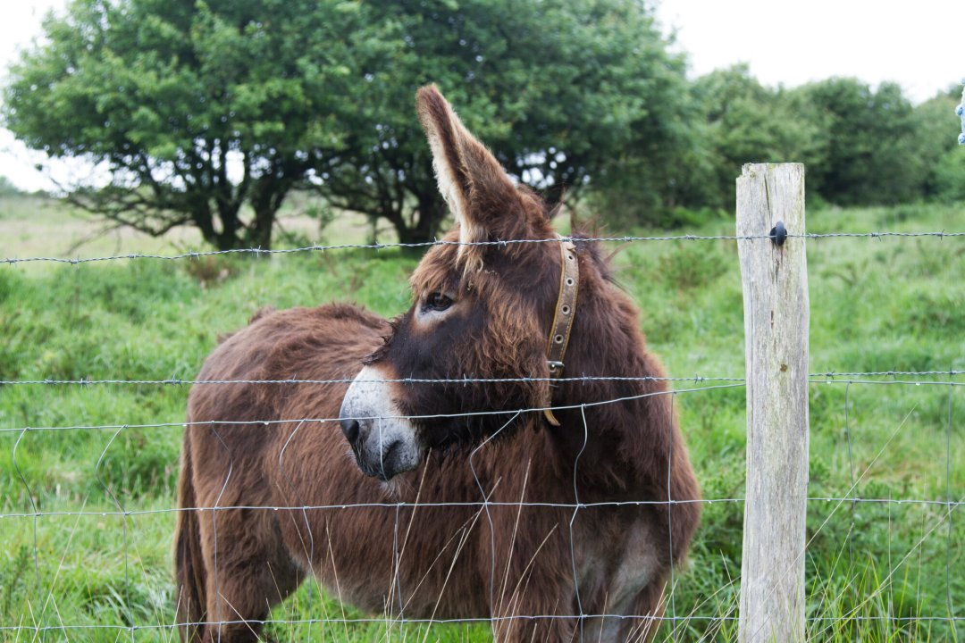 donkey_reading_my_tea_leaves_IMG_0927