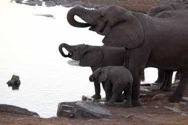 Elefanten müssen auch den Umgang mit dem eigenen Rüssel lernen.