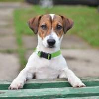 6 лучших пород собак для интровертов
