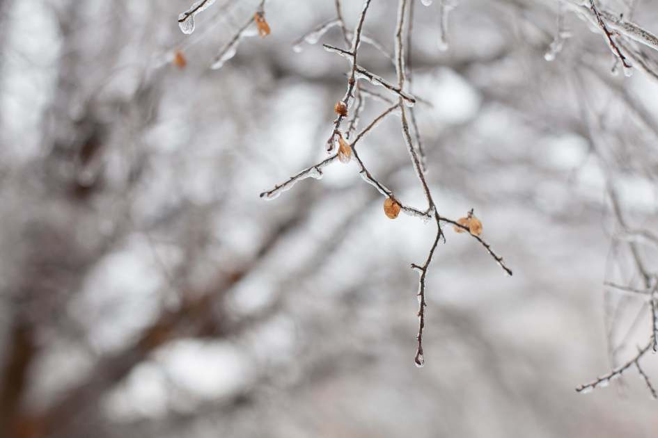 Beth Dean Photo - Icy Winter Day