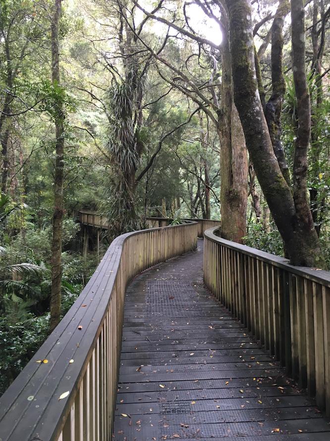 NZ Whangarei Canopy Walk 1