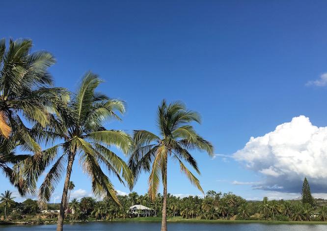 Hawaii Oahu Palm Trees 1
