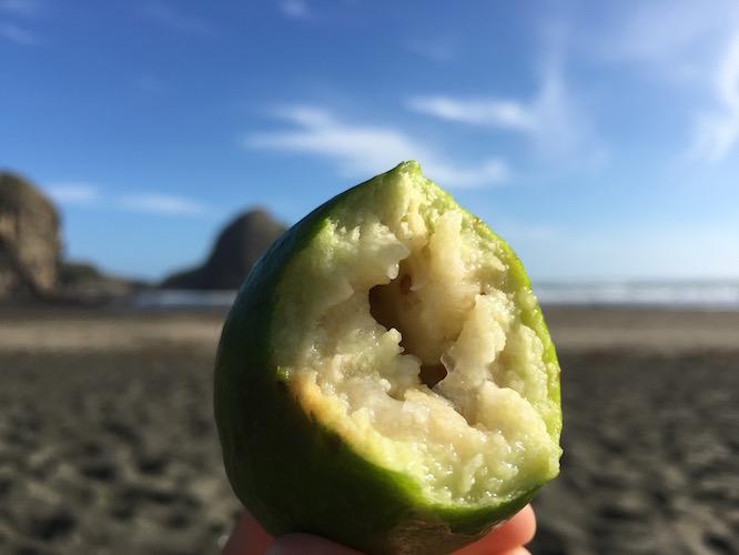 NZ Piha Beach Feijoa