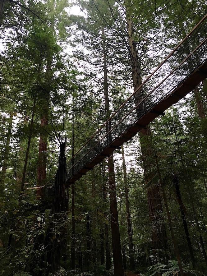 Rotorua Redwoods 4