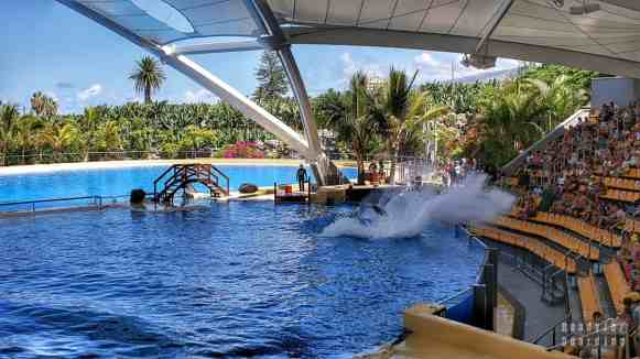 Teneryfa - Loro Park (pokaz z orkami)