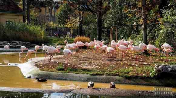 Tiergarten Schönbrunn, Wiedeń - Austria