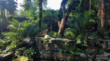 Zoo w Singapurze