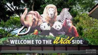 Ogród zoologiczny w Singapurze