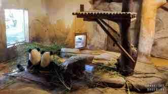 Ogród zoologiczny w Madrycie - Hiszpania