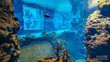 Oceanarium - Wrocław