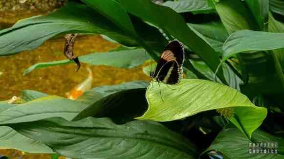 Dom Motyli w Jonsdorf - Saksonia, Niemcy