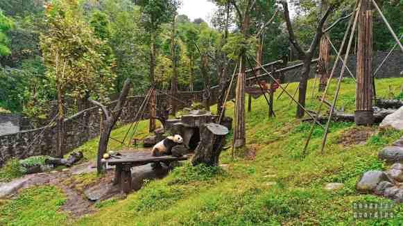 Dujiangyan Panda Base