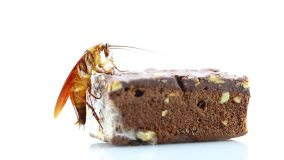 gut load feeder insects with bug brownie