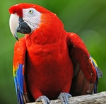 Moody Macaw, part of the Animals Alphabet