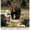 Classic Alaska Charters where Adventure Happens! Photo #4
