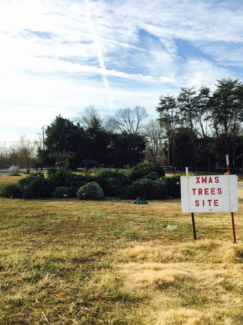 Christmas Tree Recycling at Crozet Park