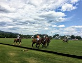 Roseland Polo at King Family Vineyards