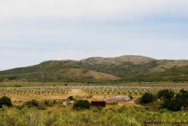 4499-Spectacular-View-Plots-to-the-Valley-of-Maldonado-2113