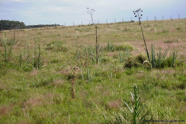 4795-Incredible-Campo-Land-in-Elevated-Area-in-Rinco-del-Anastasio-near-Jose-Ignacio-1831