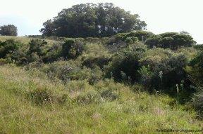 4795-Incredible-Campo-Land-in-Elevated-Area-in-Rinco-del-Anastasio-near-Jose-Ignacio-1836