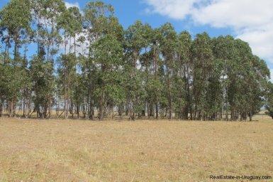 4797-Attractive-Ranch-Land-with-small-School-close-to-Jose-Ignacio-1744