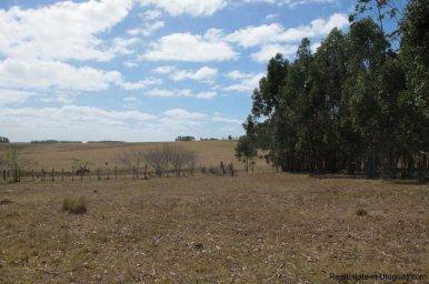 4797-Attractive-Ranch-Land-with-small-School-close-to-Jose-Ignacio-1747