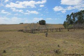 4797-Attractive-Ranch-Land-with-small-School-close-to-Jose-Ignacio-1752