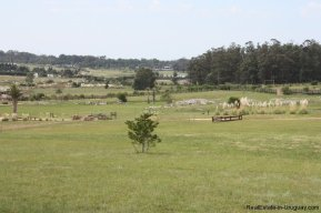 4850-Wonderful-Ranch-Land-just-2km-from-the-Sea-Punta-Piedras-1891
