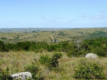 5151-La-Canas-Mountain-Land-with-Good-Quality-Soil-2674