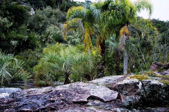 5160-Palms-of-Small-Mountain-Farm-in-the-Aigua-Area
