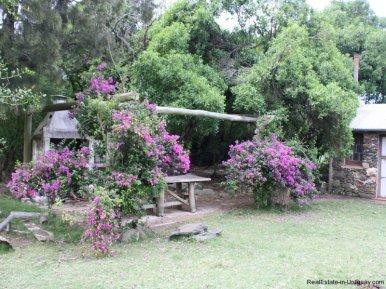 5538-Little-Posada-on-100-Hectare-Land-in-Minas-4392