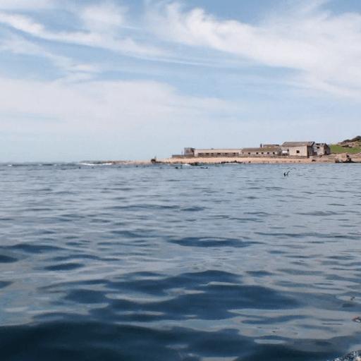 Isla de lobo, Uruguay