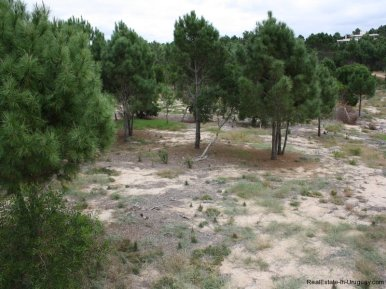 5570-Land-in-Laguna-Escondida-Jose-Ignacio-4456