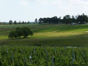 1416-Winery-on-89-ha-close-to-Carrasco-Montevideo-4673